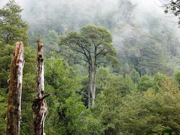 Técnicas silviculturales usadas en bosque nativo – mar 2017