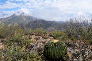 Foto 1: Ejemplo de paisaje de matorral xerófito.