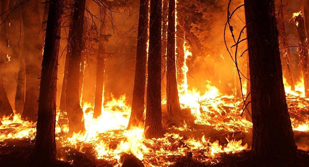 Efectos del Fuego en los Ecosistemas Forestales