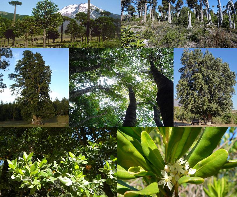 Monumentos Naturales de Chile