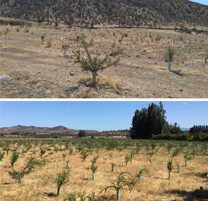 Mantención de reforestaciones y revegetaciones por obras de Embalse Chacrillas