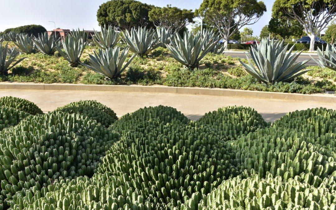 Gira Tecnológica Experiencia California: Visión Sustentable del Paisaje.