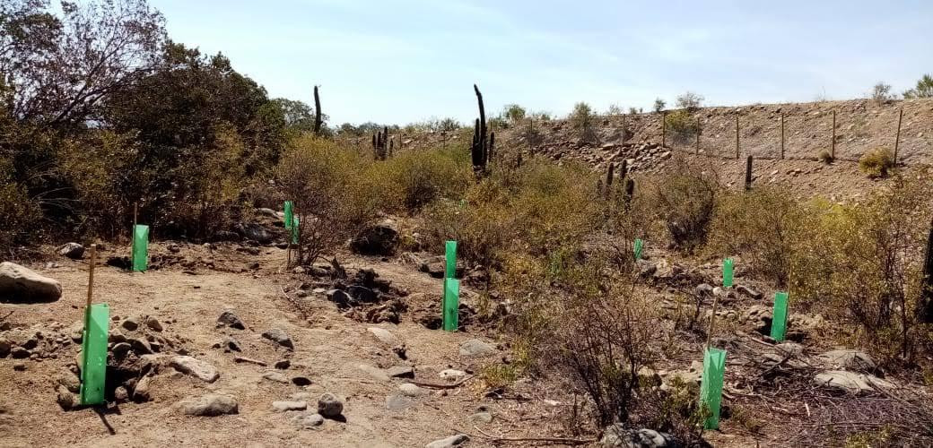 Reforestación, mantención y seguimiento en Pirque,  Región Metropolitana.