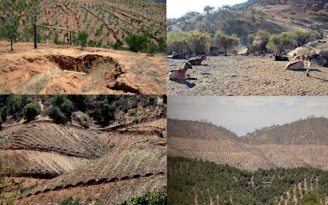 Prácticas de manejo y obras de conservación de suelo y agua