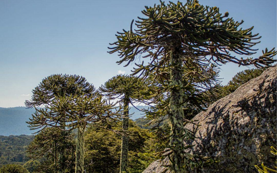 Estado de Conservación Flora Nativa de Chile