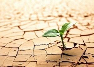 Estrés hídrico en plantas y adaptación a la sequía