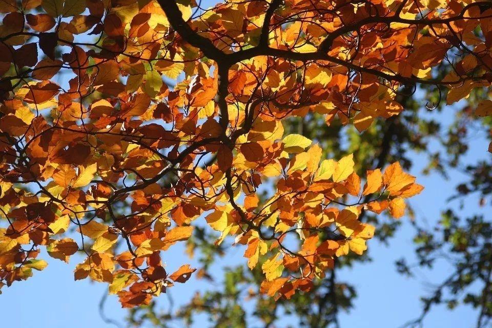 ¿Por qué caen las hojas en otoño?
