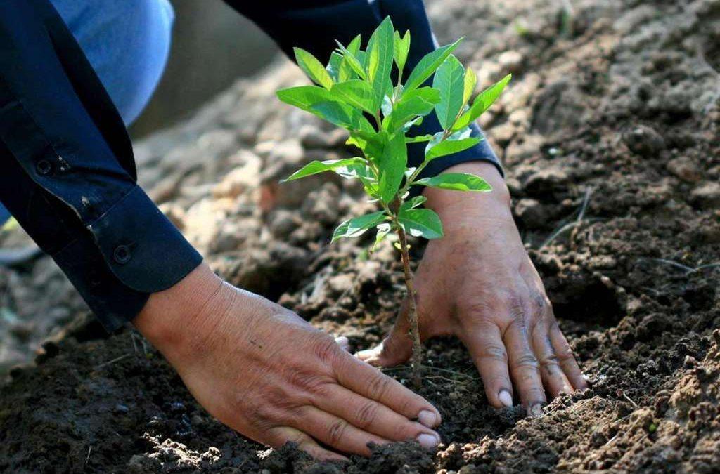 Beneficios de reforestar con especies nativas