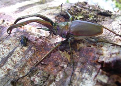 La importancia de los coleópteros como bioindicadores