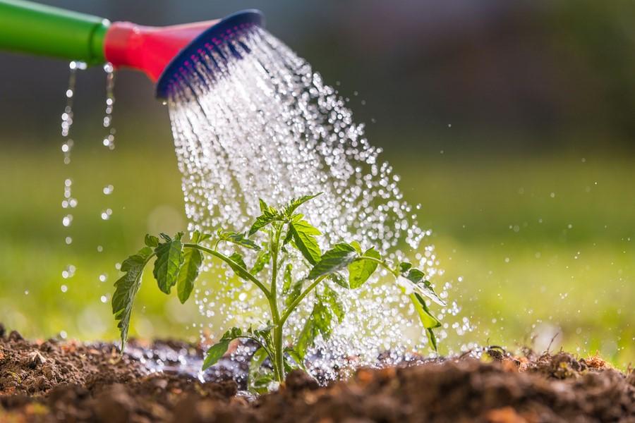 ¿Cómo mejorar el uso de agua en jardines?